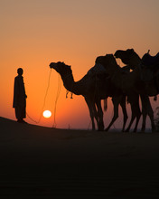 Man With Camels At Sunset