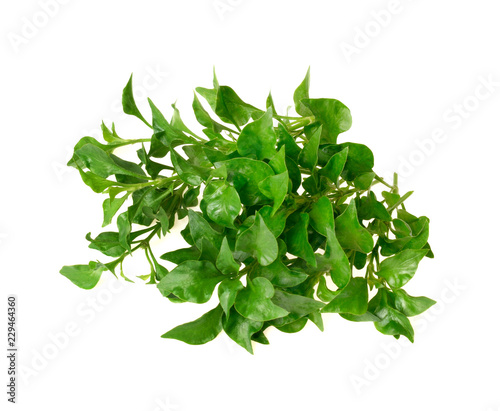 Poster Condiment Fresh watercress isolated on white background