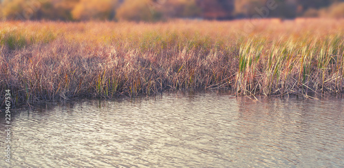 Foto auf Leinwand Lachs Banner natural autumn landscape river Bank dry grass reeds water nature Selective focus blurred background