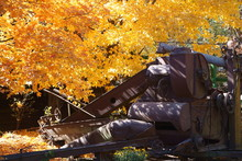 Antique Combine Parked Under A Maple Tree In The Fall