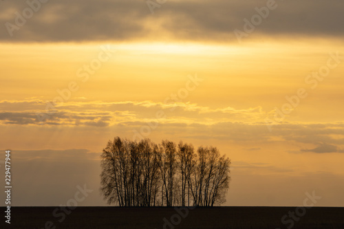 Spoed Foto op Canvas Oranje Beautiful golden sunrise with dark silhouette of trees