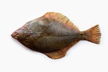 Nice Shaped Flatfish Or Flound...
