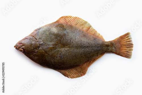 Nice shaped Flatfish or flounders (Pleuronectidae)also known as plaice,dab,sole or flukes, isolated on white Fototapet