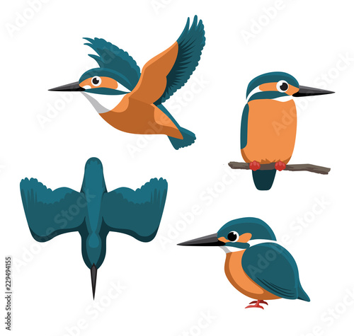 Leinwand Poster Common Kingfisher Cartoon Vector Illustration