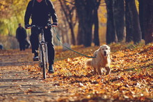 Walking With A Dog On A Bicycle