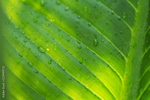 Natural Green Leaves Background Leaf Texture Abstract