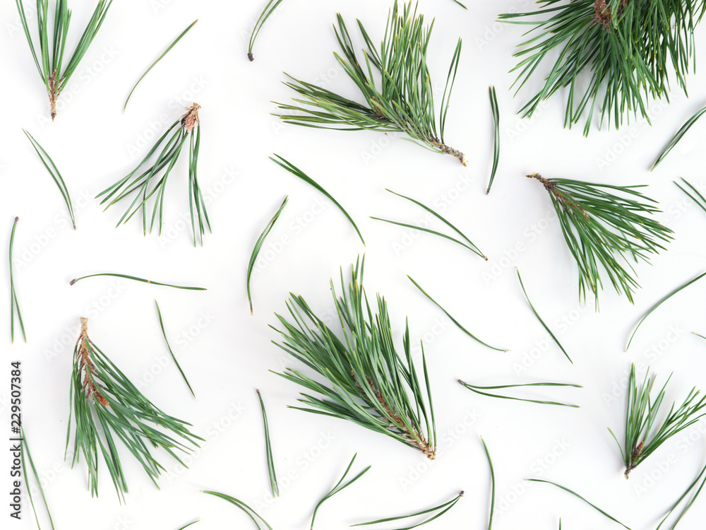 Fototapety, obrazy: Pattern of pine needles, flat layout, top view.