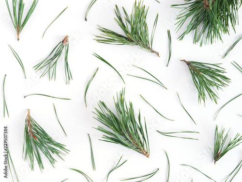Fotografie, Obraz  Pattern of pine needles, flat layout, top view.