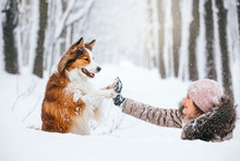 Beautiful Young Woman And Funny Red Dog Are Walking In The Snow In The Park. They Walk And Play In The Snowstorm.