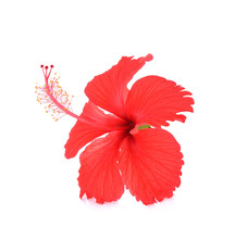 Hibiscus Isolated On White Ba...
