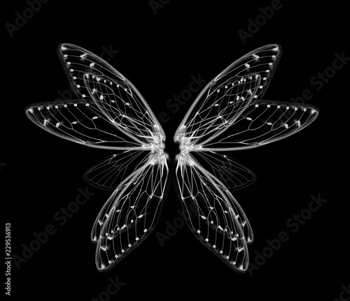 Cuadros en Lienzo wings of Insect cicada on white bacground