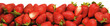 canvas print picture - LINE OF STRAWBERRIES