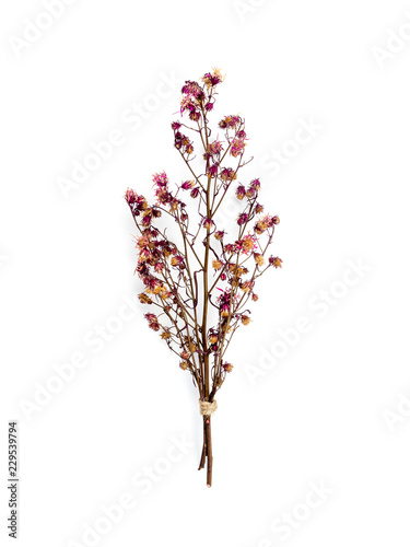 Fototapeta Top view bouquet of dried and wilted red Gypsophila flowers isolate on white background obraz