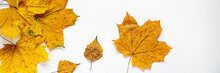 Banner For Website, Autumn Leaves On White