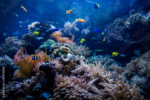 Canvas Prints Coral reefs Aquarium. Underwater life landscape