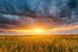 Summer field full of grass, sunset sky above. Beautiful sunset landscape with dark clouds
