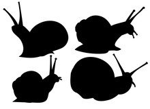 Set, Collection Of Snail Silhouette