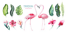 Hand Drawn Watercolor Tropical Birds Set Of Flamingo. Exotic Rose Bird Illustrations, Jungle Tree, Brazil Trendy Art. Perfect For Fabric Design. Aloha Collection.