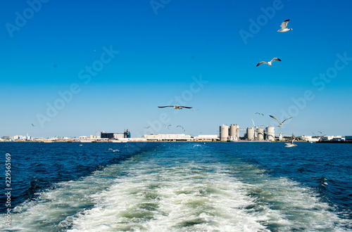 Cadres-photo bureau Turquie Sky sea water bridge river Seagull