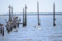 Pelican On Gulf