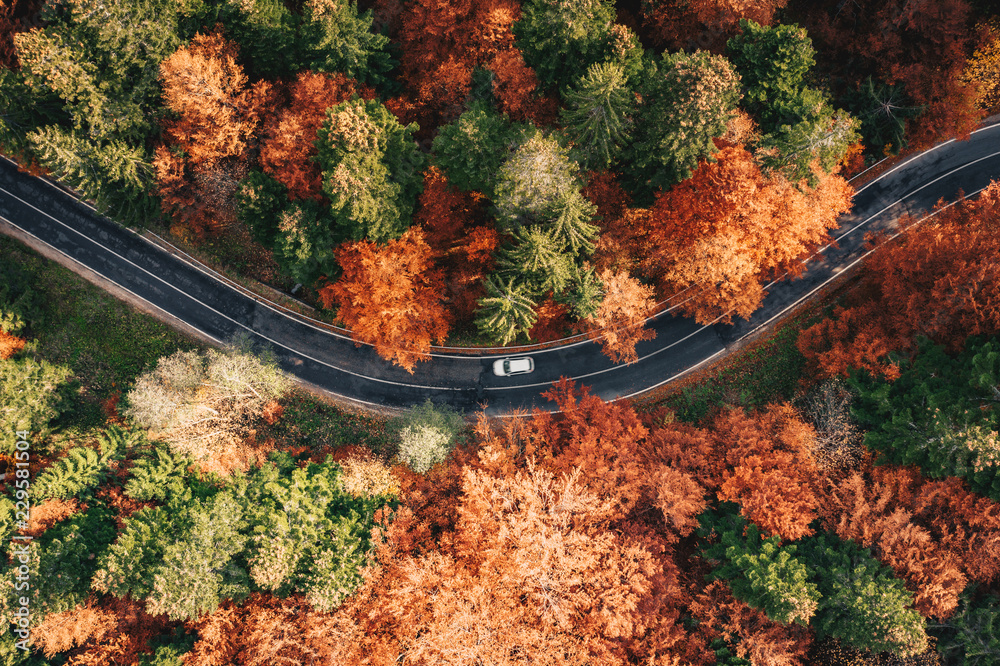 Fototapeta Car on the road surrounded by forest in the fall. Carpathian Mountains, Romania