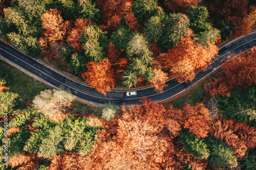Car on the road surrounded by forest in the fall. Carpathian Mountains, Romania