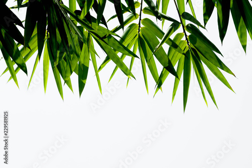 In de dag Bamboo Green bamboo leaves on a white background