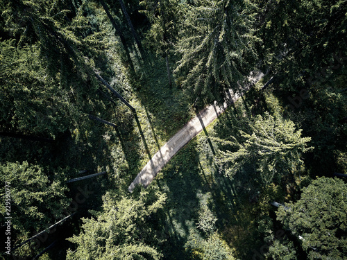 Fotobehang Olijf street between large trees from top with drone aerial view, landscape, autumn