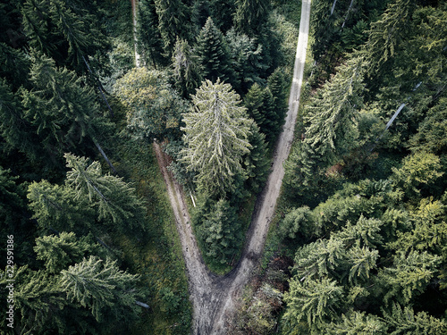 street between large trees from top with drone aerial view, landscape, autumn