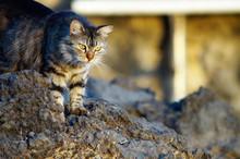 Katze Auf Felsbrocken Stehend