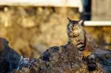 Katze Auf Felsbrocken Sitzend