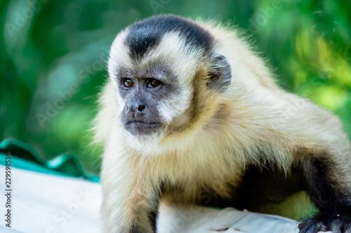 Foto op Plexiglas Aap Macaco Prego