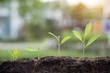 Seed and planting.Growth of business,business concept.