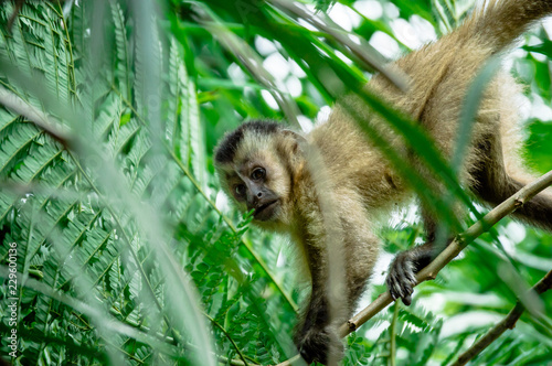 Foto op Canvas Aap Macaco Prego