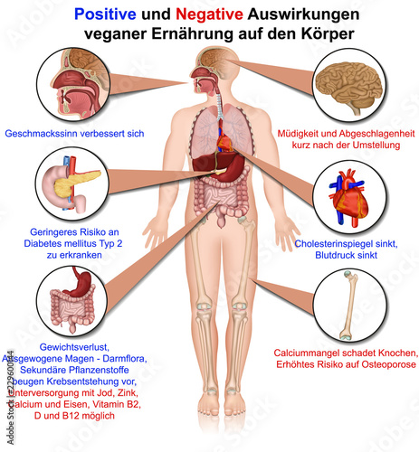 Auswirkungen Veganer Ernährung Auf Den Körper