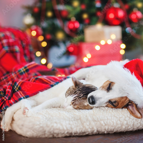 Cat and dog sleeping under christmas tree