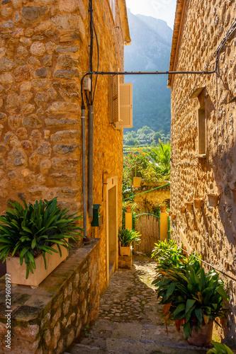 Fotografie, Obraz  Urlaub, Mallorca, Palmen, Bananen, Wandern, Katze, Kitty, Tiere, Früchte