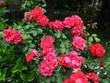 canvas print picture - Flores en Primavera