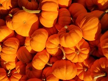 Bright Small Pumkins