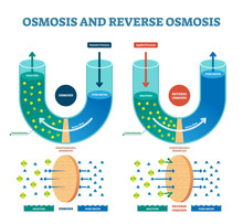 Osmosis Reverse Vector Illustr...