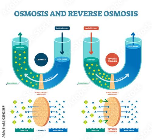 Fotografía  Osmosis reverse vector illustration