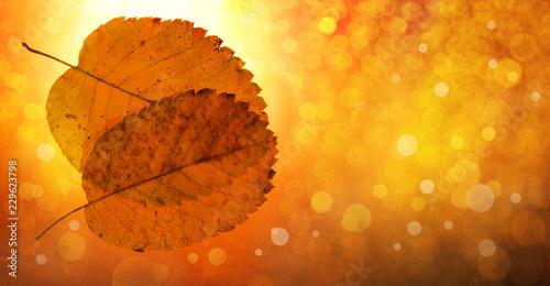 autumn background yellow orange leaves festive bokeh
