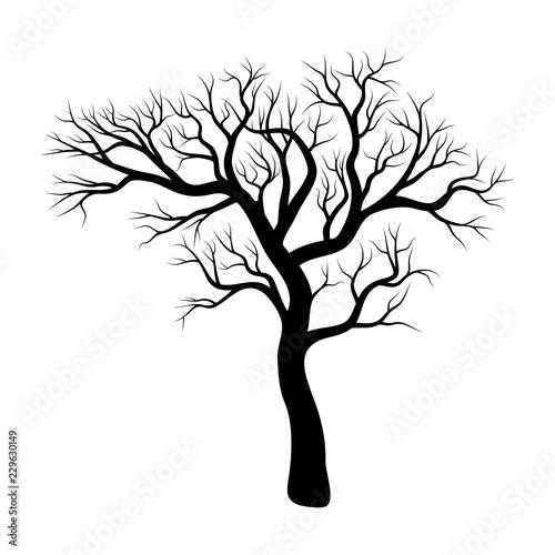 Fotografía bare tree winter design isolated on white background