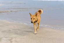 The Dog Runs Along The Shore O...