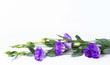 Bunch of purple eustoma flowers (prairie gentian, lisianthus) lying on white background. Fresh open flowers and close buds on a twig. Beautiful floral mockup.