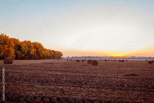 Deurstickers Platteland View of autumn field with haystacks at sunset. Ukrainian landscape