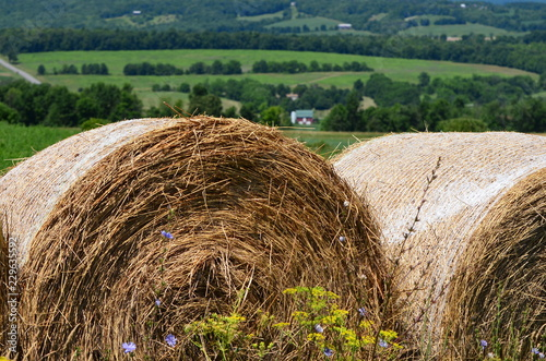 Photo  Round hay bales in a field on the farms and hills of upstate New York in summer