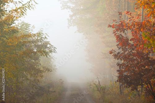 Papiers peints Foret brouillard Misty morning in autumn forest.
