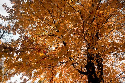 tree leafs © max