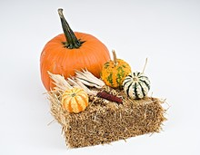 Colorful Pumpkins On White Bac...
